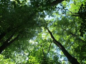 Informační kampaň o změně klimatu – Polsko