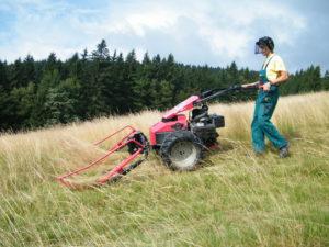 Záchrana smilkových trávníků v EVL Beskydy – Česká republika