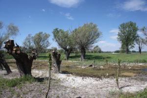 Ochrana biotopů a ptáků – Slovensko