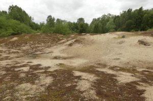 Pozvání na workshop o managementu a obnově pobřežních dun a písečných pláží