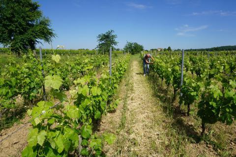 Udržitelné zemědělství: pomoc zemědělcům v EU přizpůsobit se změně klimatu