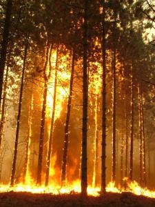 Školící program a program prevence lesních požárů – Maďarsko