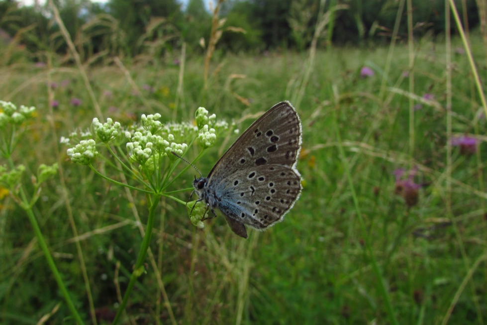 LIFE Ze života hmyzu – Letecký den na Kamenném